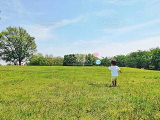 公園,夏,芝生,東京,晴天,暑い,風船,小さい,Tシャツ,幼児,男の子,2歳,お気に入り,猛暑,白シャツ,夏日,夏服,水元公園