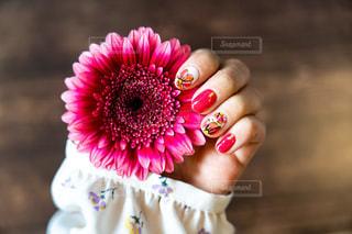 花を抱いている手の接写の写真・画像素材[2123894]
