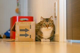 カウンターに座っている猫の写真・画像素材[2291574]