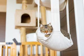 猫の写真・画像素材[2476362]