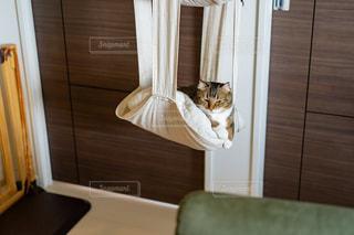 猫の写真・画像素材[2476363]