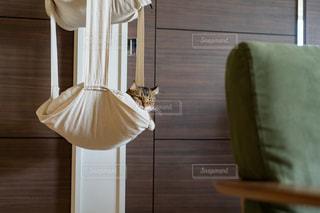 猫の写真・画像素材[2476364]