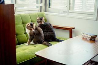猫の写真・画像素材[2479555]