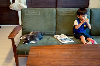 猫の写真・画像素材[2479558]