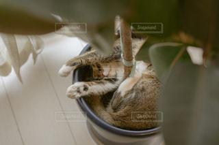 ボウルに座っている猫の写真・画像素材[2718724]
