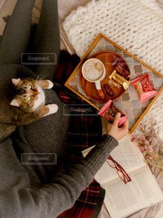 毛布の上に座っている猫の写真・画像素材[2816442]