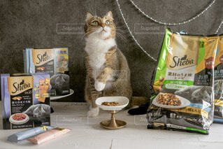テーブルの上に座っている猫の写真・画像素材[4231950]