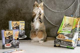 テーブルの上に座っている猫の写真・画像素材[4231956]