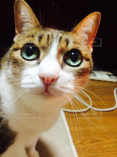 猫,ねこ,目,瞳,キジトラ