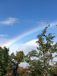 かわいい,虹,秋空,ガーデン,キレイ