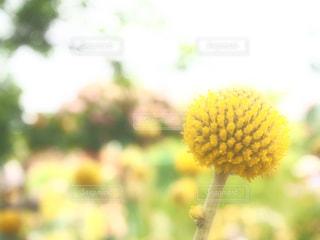 花の写真・画像素材[620207]