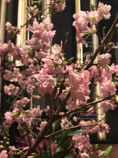桜,東京,恵比寿