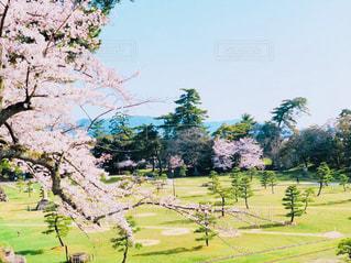 緑豊かな野原の写真・画像素材[1098398]