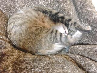近くの地面に横になっている猫の写真・画像素材[989731]