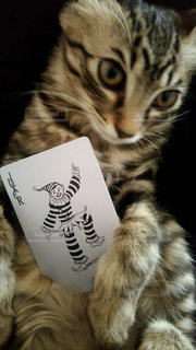 本の上に座って猫の写真・画像素材[989744]
