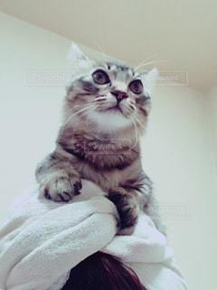 ベッドの上に座っている猫の写真・画像素材[989747]