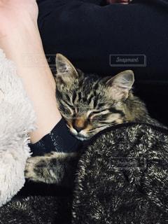 ベッドの上で横になっている猫の写真・画像素材[1276917]
