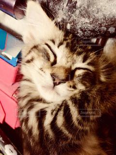 互いの上に横になっている猫の写真・画像素材[1276923]