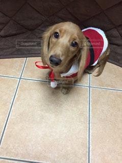 タイル張りの床の上に横たわる犬の写真・画像素材[1211261]