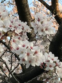 自然,風景,春・桜・花