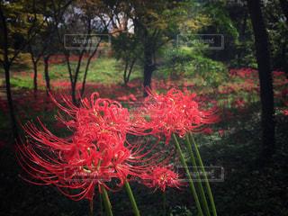 自然の写真・画像素材[529106]