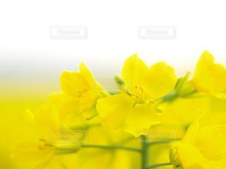 花の写真・画像素材[598110]