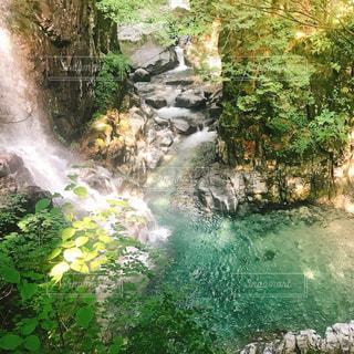 森の中の大きな滝の写真・画像素材[1475449]