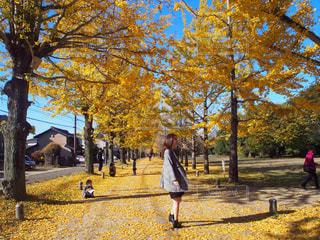 木の隣に道を歩いている人の写真・画像素材[1617841]
