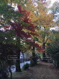 玉川上水の紅葉。の写真・画像素材[1650755]