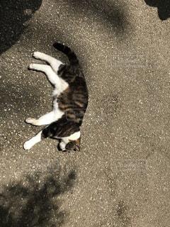 地面に横になっている猫の写真・画像素材[1285828]