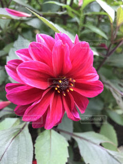 近くの花のアップの写真・画像素材[1370991]