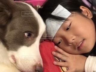 地面に横たわっている茶色と白の犬の写真・画像素材[2732106]