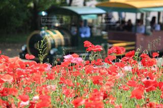 花の写真・画像素材[526392]