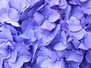 花の写真・画像素材[535463]