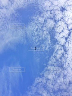 青空と鳥の写真・画像素材[1316286]