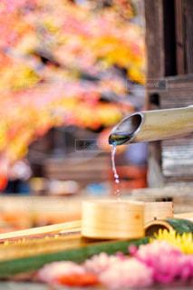 勝林寺の花手水の写真・画像素材[1674942]