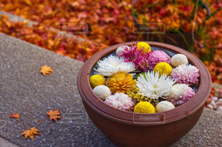 勝林寺の花小鉢と赤絨毯の写真・画像素材[1674949]