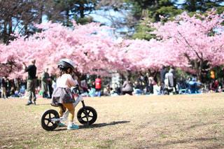 公園,花,春,桜,東京,青空,女の子,お花見,河津桜,ストライダー,林試の森公園