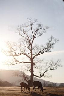 空,動物,太陽,光,朝焼け,鹿,奈良,奈良公園,朝霜