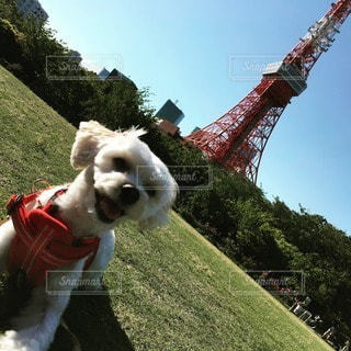 犬の写真・画像素材[11675]