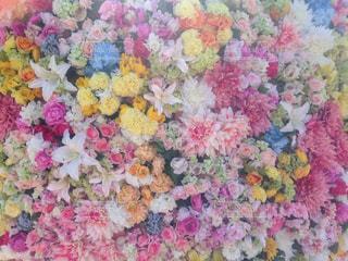 色とりどりの花のグループの写真・画像素材[710314]