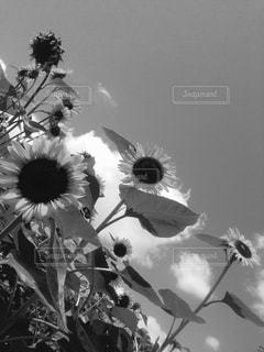 近くの花のアップの写真・画像素材[814494]