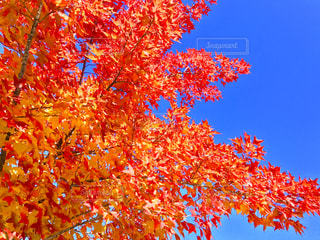 近くの木のアップの写真・画像素材[851313]