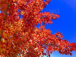 近くの木のアップの写真・画像素材[871605]