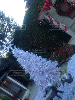 庭,ライトアップ,クリスマス,鹿,クリスマスツリー,ガーデン