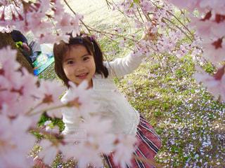 桜,ピンク,女の子,お花見,笑顔,お出かけ