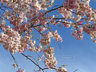 木からぶら下がって花の写真・画像素材[1100925]