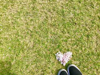 桜,芝生,ピンク,黒,ハート,グリーン,ホワイト,スニーカー