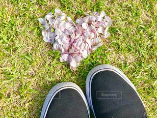 近くの花のアップの写真・画像素材[1112349]