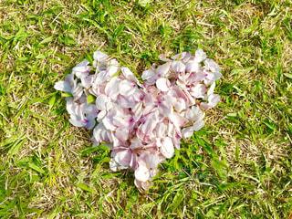 緑の芝生のフィールドの花の写真・画像素材[1112353]